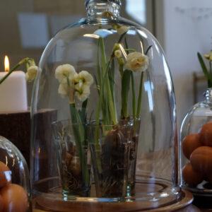 Stor glasklokke med træbund